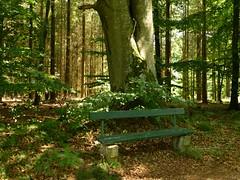 RuheoaseWald /Forest (dorisgoebel) Tags: wald forest ruheoase natur bäume bank tree