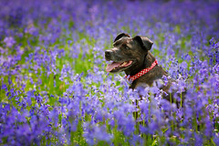 Maddie in Bluebell Woods