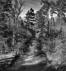 Robeson Creek, morning (Denise Worden) Tags: landscape landscapephotography blackandwhite panorama morning morninglight anseladams zonesystem