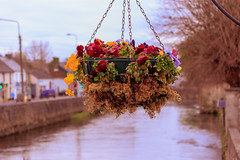 The Hanging Gardens of Ennis (Carl Cohen_Pics) Tags: fergusriver flower river ennis countyclare ireland spring canon nature