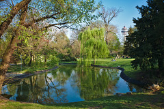 Spring Time in Vienna (Rene'D.) Tags: 2016 spring time vienna green beautifiul reflection reflections lake wonderful schweizer garten garden trauerweide weeping willow