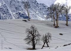 Snow 13 ... (Bijanfotografy) Tags: nikon nikond800 nikon180mm28afd india kashmir jammukashmir jk snow mountainside sonamarg