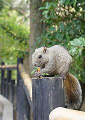 ポッキー大好き! (inumochi) Tags: squirrel écureuil