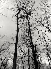 When, the trees told me about life. (silmihidayat) Tags: blackandwhite tree jawatimur blitar indonesia photograhpy amateurs abstract black white iphone iphone4