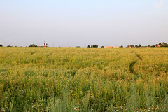 Path in the fields (gráce) Tags: nature pastoral landscape path pathway field plants grass flowers countryside canon canoneos550d