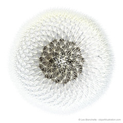 3d Render Dandelion Seeds Fibonacci Sequence Arrangement Top View (clipartillustration) Tags: plant flower geometric nature beauty blackbackground illustration ball spiral golden 3d weeds weed flora soft pattern phi view graphic blossom top object render softness seed science symmetry dandelion growth sphere fibonacci repetition symmetrical mathematics form bud sequence shape protection fragile arrangement maths herb topview biological generated iteration dispersal ratio goldenratio blowball orthographic equiangular