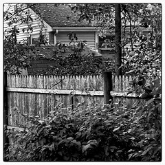 Good Fence, Good Neighbor (Timothy Valentine) Tags: blackandwhite home fence friday 1014 silverefex iphone36530 iphone5sbackcamera415mmf22