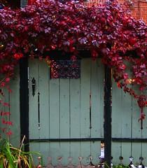 Door to secret garden (celinemarsolais) Tags: street door color nature digital garden backalley montreal secret sony explore