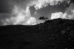 Chasseral Calling (Toni_V) Tags: trees bw monochrome landscape schweiz switzerland blackwhite europe suisse hiking 28mm rangefinder jura bern svizzera wanderung m9 2014 svizra sep2 elmaritm 140906 niksoftware messsucher ©toniv leicam9 lechasseral jurahöhenweg l1018596