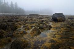 maine series no.3 (Mustekala5) Tags: trees mist seaweed pool rock landscape seaside nikon air salt foggy september tokina tidal acadia acadianationalpark mustekala5