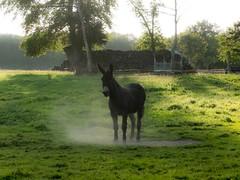 DSCF7326 (Alain D:-))) Tags: france faune puisaye
