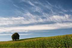 """The Tree - September 2014"" (helmet13) Tags: d800e raw thetree tree chestnut meadow cornfield sky clouds sunshine oldfriend silence harmony aoi heartaward peaceaward 100faves world100f simplicity"