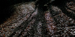 """camminando ...nel bosco ("""" paolo ammannati """") Tags: autumn foglie october natura autunno bosco casentino ottobre paoloammannati"""