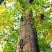 Ruth Zimmerman Natural Area (Autumn Visit) (6)