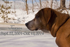 The last Goodbye is the hardest one to say (TimsTolalPhotography) Tags: winter dog rip