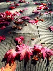 light and shadow (Sasakei) Tags: autumn japan sapporo hokkaido explore iphone