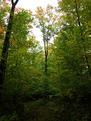 """Narrow Tree in Sea of Leaves • <a style=""""font-size:0.8em;"""" href=""""http://www.flickr.com/photos/34843984@N07/15400586086/"""" target=""""_blank"""">View on Flickr</a>"""