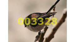 Flickr_003328 (lima_ho_htc) Tags: birds long tit tailed gardenbirds franbanks rememberthatmomentlevel4 rememberthatmomentlevel1 rememberthatmomentlevel2 rememberthatmomentlevel3 rememberthatmomentlevel9 rememberthatmomentlevel5 rememberthatmomentlevel6 rememberthatmomentlevel10