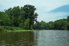 Bayou Boeuf, Louisiana (Shane Adams Photography) Tags: trees nature louisiana bayou swamp wetlands cypress waterscape lafourcheparish ilobsterit