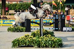 Sergio lvarez Moya riding Carlo 273 (yasminabelloargibay) Tags: horse caballo cheval grey mare cavalier cavallo cavalo pferd equestrian stallion equine csi hest paard showjumping hpica horserider gelding showjumper equestrianism equitacion hipismo carlo273 sergioalvarezmoya