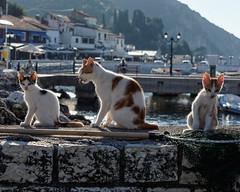 Parga Cats (Mac McCreery) Tags: cats pentax greece parga tamron1750