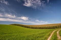 """Wavy"" (helmet13) Tags: sky landscape cornfield raw meadow simplicity agriculture aoi 100faves peaceaward heartaward platinumheartaward world100f platinumpeaceaward d800e"
