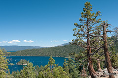 Emerald Bay and Fannette Island (Lake Tahoe, California) (weberpal) Tags: california usa lake tree nature nikon tahoe lac sigma laketahoe arbre redcedar emeraldbay southlaketahoe californie 2014 etatsunis étatsunis emeraldbaystatepark fannetteisland cèdre d300s