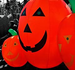 PUMPKINS (Joe Desiderio) Tags: bw halloween brooklyn coneyisland pumpkins lunapark selectivecoloring