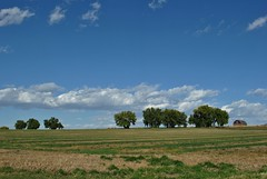 Wide Open October (Let Ideas Compete) Tags: trees field skyline clouds rural october colorado longmont horizon sunny farmland cottonwood openspace hayfield agricultural cottonwoods