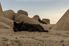 Gatos (vonher) Tags: cats nikon gatos gato mininos d5100