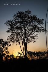 Quando o sol se põe... (Centim) Tags: cidade minasgerais sol brasil nikon foto br interior natureza paisagem mg pôrdosol fotografia árvore vegetação estado crepúsculo américadosul país sudeste d90 crepúsculovespertino paisagemmineira continentesulamericano