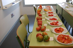 Degustación tomate ecológico puntdesabor 7