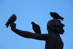 IMG_4637 (ShellyS) Tags: nyc newyorkcity birds centralpark manhattan parks statues columbuscircle