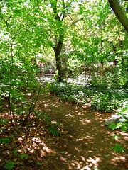 "Forest path speckled with light • <a style=""font-size:0.8em;"" href=""http://www.flickr.com/photos/34843984@N07/15522382066/"" target=""_blank"">View on Flickr</a>"