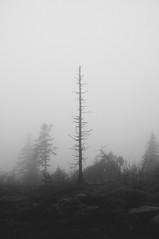 Sociability (Areksim) Tags: autumn white black tree nature weather fog forest dark nikon bad foggy d90