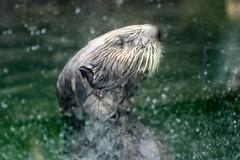 IMG_6678 (monsie315) Tags: nyc fish coneyisland aquarium aquaticlife nyaquarium