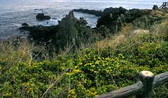 On the seashore of the volcanic Jeju Island , South Korea (singingdaisy) Tags: southkorea jeju volcanic autofocus heartawards visionaryartsgallery photographyforrecreation theredgroup thelooklevel1red