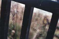 Interweb (n.clamp) Tags: film web derbyshire peakdistrict spiderweb cobweb railing agfa ladybowerreservoir ladybower ladybowerlake