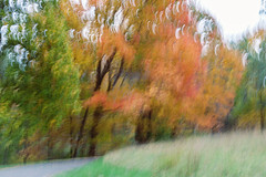 autumn impression (JMS2) Tags: autumn trees fall nature canon scenic foliage artsy impression icm cameramovement intentionalcameramovement