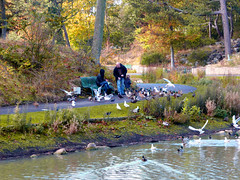Hesketh Park (edowds) Tags: autumn trees england people lake birds october southport merseyside 2014 heskethpark