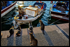 waiting for their share...... (scorpion (13)) Tags: light sunset cats holiday beach turkey wonderful for evening waiting moments fishermen frame promenade his catch their stroll photoart along share foca eski cleans