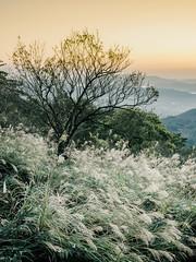 PhoTones Works #5946 (TAKUMA KIMURA) Tags: trees sea mountain mountains landscape scenery natural    kimura em1   takuma     photones clouds