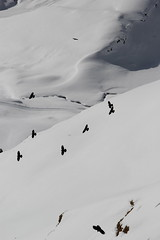 Grindelwald - First (Shabba Al) Tags: grindelwald skiing mountains alpes snow sunshine chough alpine