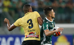 Palmeiras x São Bernardo (16/02) (sepalmeiras) Tags: allianzparque campeonatopaulista palmeiras sep sãobernardo sériea1 palmeirasxsãobernardo16022017 palmeirasxsaobernardo16022017 willian