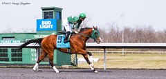 Duffle Bag (Casey Laughter) Tags: racehorse turfway thoroughbred horse horseracing horses winner loser fun racing racetrack race track saddlecloth tack gate taa