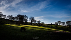 Lines of light (steved_np3) Tags: silhouette horse light lines ray blue green trees mountain nantyglo wales