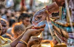 Golden Ash (Padmanabhan Rangarajan) Tags: kapaleeswarantemple arubathimoovar vibhuti prasad offering devotees festival carfestival chariot