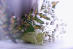 Soft bouquet (olgaibáñez) Tags: soft bouquet ramo high key flor flower nature bodegon still life flores pastel