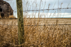 Waiting for Spring (L E Dye) Tags: barbedwire fencefriday alberta barn canada d5100 ledye nikon spring abandoned fence prairie rural