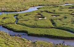 *lonely sheep* (albert.wirtz) Tags: albertwirtz harris isleofharris hebrides hebriden äuserehebriden outerhebrides schottland scotland unitedkingdom vereinigteskönigreich grosbritannien schaf sheep lonelysheep northton northtonsaltings grasland meadow wiese kanal entwässerungsgraben